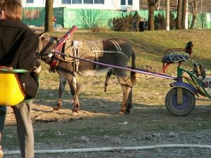 Повозка для осла или пони.