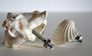 Ручки для шкафа из морских ракушек