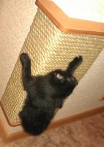 Когтеточка для кошек своими руками